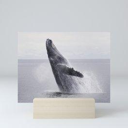 Lovely humpback whale is dancing in the ocean floor Mini Art Print