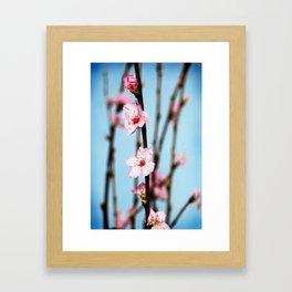 Pretty Pink Peach Petals Framed Art Print