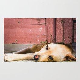 Dog Tired Rug