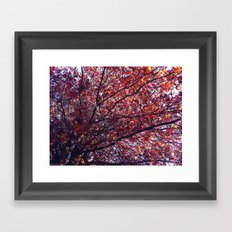Under the trees - Autumn Framed Art Print