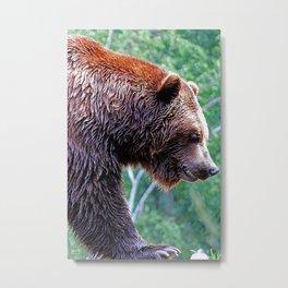 Grizz Metal Print