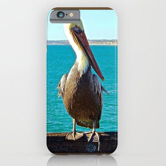 Portrait of a Perky Pelican iPhone & iPod Case