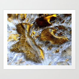 Gold Feathers  Art Print