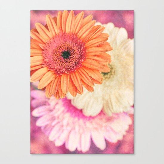 Sweet Daisy Sorbet Canvas Print