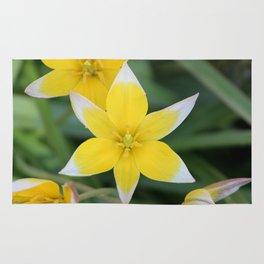 Yellow Tulip Dasystemon Tarda Rug