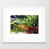 finding nemo Framed Art Prints featuring Finding Nemo! by Becky Dix