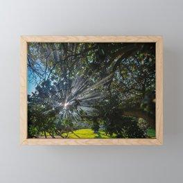 Morning Mist in the Trees Framed Mini Art Print