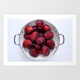 Some violet plums in a white glazed colander. Art Print