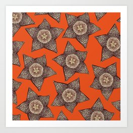 stapelia flower Art Print