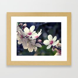Blooming spring Framed Art Print