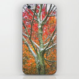 Snow Falls iPhone Skin