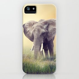 African Elephant near water at sunset iPhone Case