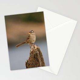 Checking things out! Stationery Cards