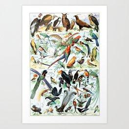 Vintage Illustration Bird Chart II Kunstdrucke