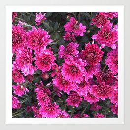 Flowers at Linvilla Art Print