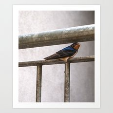 One Swallow Doesn't Make a Summer Art Print