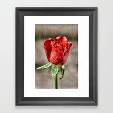 Red Rose Red Framed Art Print