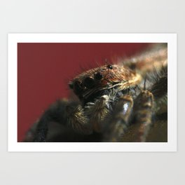 Spider on Red Art Print