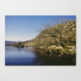 tree on the shore. rydal water, lake district, uk Canvas Print