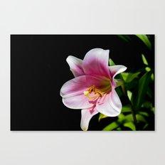 Big Lily Canvas Print