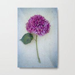 One Hydrangea II Metal Print
