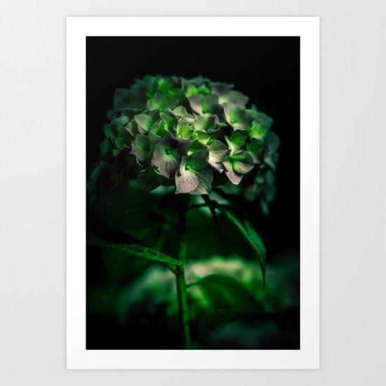 Fiore Verde Art Print