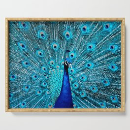 Peacock  Blue 11 Serving Tray