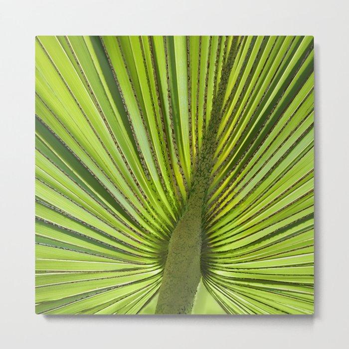 Green Palm Leaf Tropical Plant Metal Print