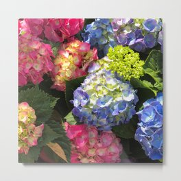 Colorful Hydrangea Flowers Metal Print