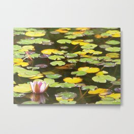 Pond flower Metal Print