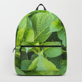 Garden of hydrangeas plants Backpack