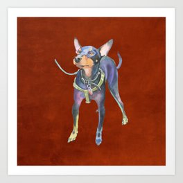 Miniature Pinscher Art Print