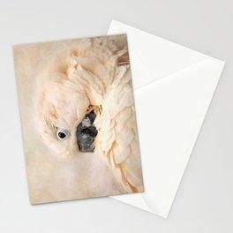 Preening Stationery Cards