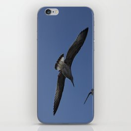 Seagulls  iPhone Skin