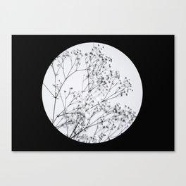 Silver Kiss I  Canvas Print