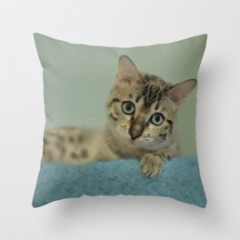 Cute Things Come in Kitty Packages Throw Pillow