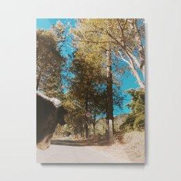 On The Road - Dog 2 Metal Print