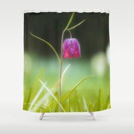 Fritillaria meleagris (Snake's Head) Shower Curtain
