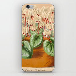 Cyclamen Atkinsil Vintage Botanical Floral Flower Plant Scientific Illustration iPhone Skin