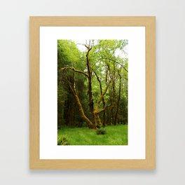 A Moos Laden Tree Framed Art Print