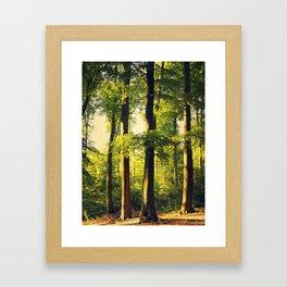 Forest in Evening Light Framed Art Print