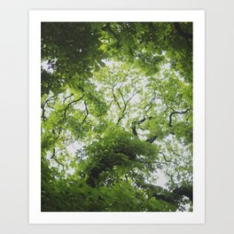 Up in the Trees Above Art Print