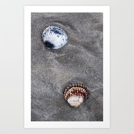 Shells on the sand Art Print