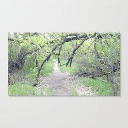 Trail Tree Canvas Print