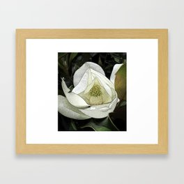 A Close up of a Magnolia Flower in Japanese Style Framed Art Print