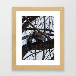 Squirrel grooming Framed Art Print