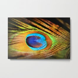 Peacock Feather, Photography Art Print Metal Print