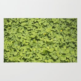 Green Clover Patch with Yellow Flowers in Nicaragua Rug