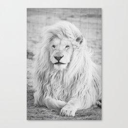 Albino Lion (Black and White) Canvas Print
