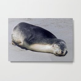 Young seal sleeping on a beach Metal Print